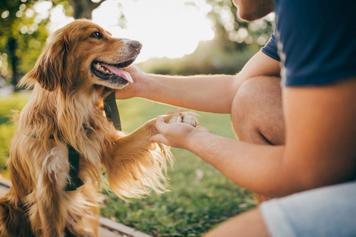 pelagem-de-cachorro-passo-a-passo-para-cuidados-dos-diferentes-tipos-de-pelo