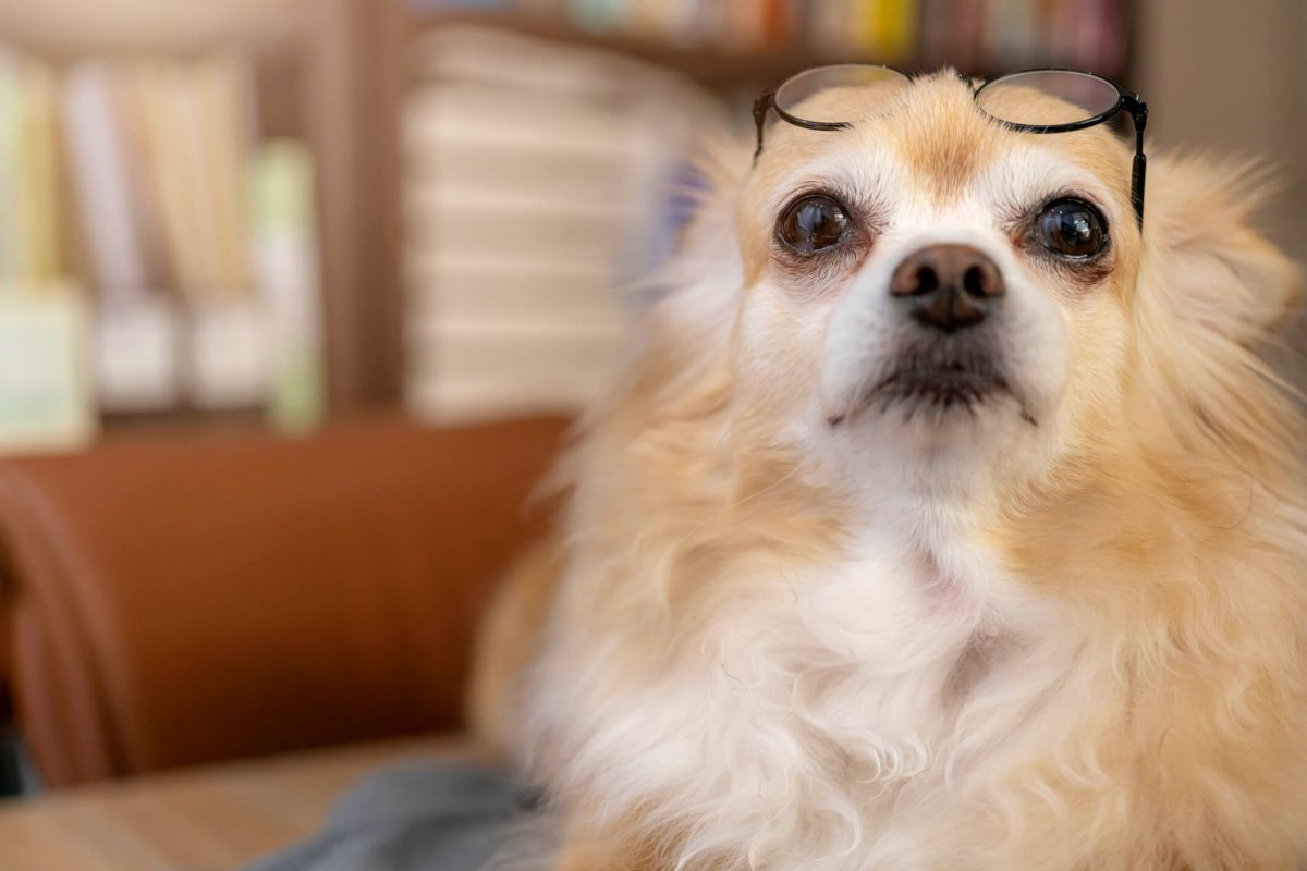 visao-dos-cachorros-e-visao-gatos-entenda-de-uma-vez-como-eles-enxergam