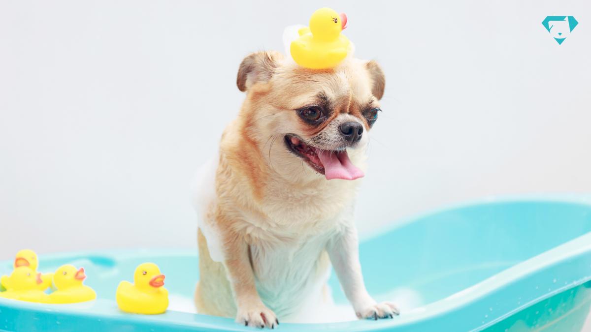 Cachorro em banheira