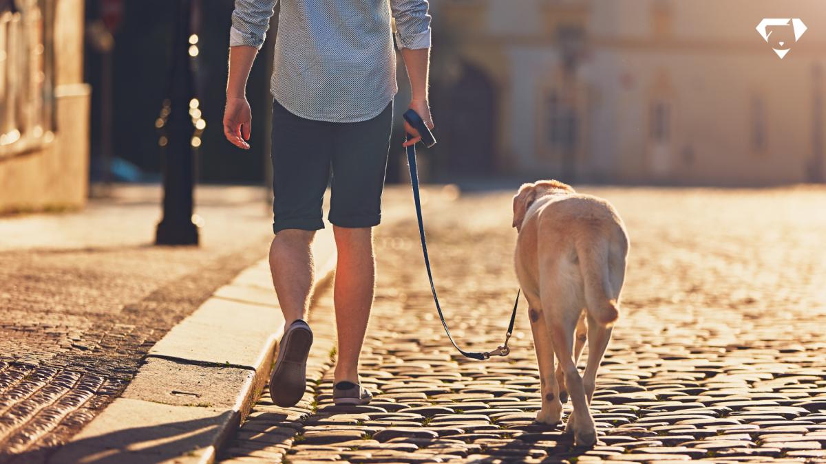 Qual melhor horário para passear com cachorro? Dicas para um passeio saudável e tranquilo.