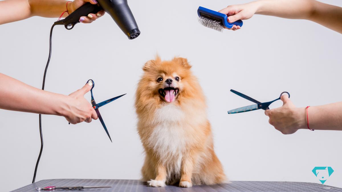 Como melhorar meu Pet Shop? Dicas para profissionalizar seu Pet Shop