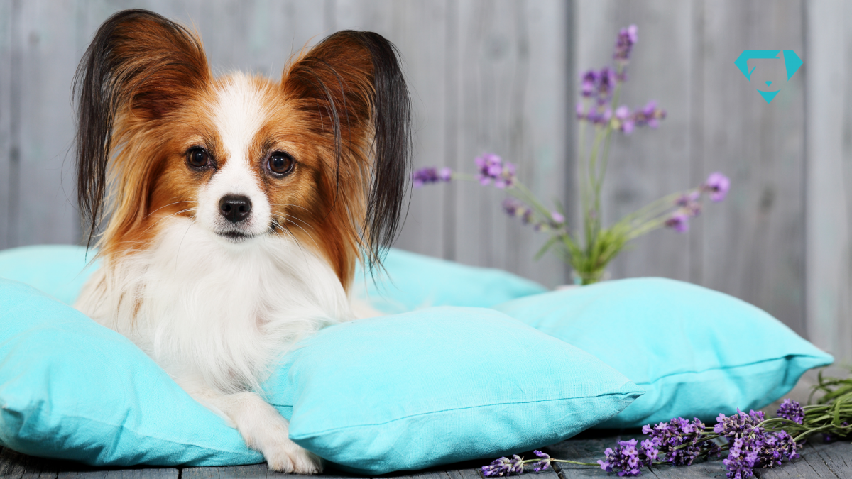 Perfume para cachorro dúvidas frequentes: Cachorro pode usar perfume?